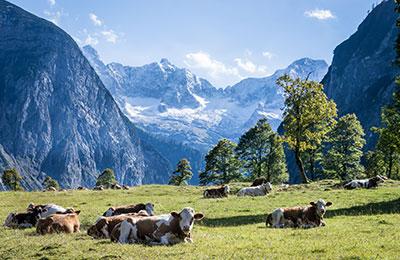 Fähre nach Österreich
